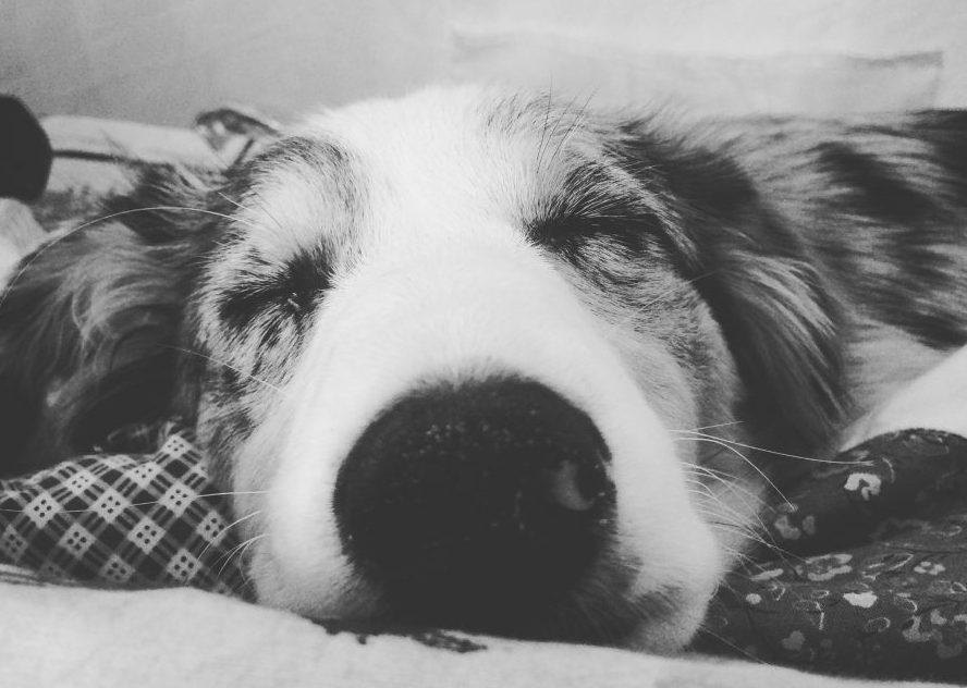 Hund black and white