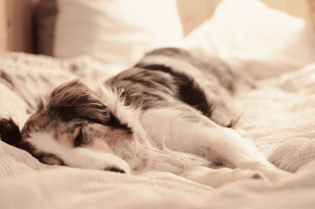 Hund und Depression