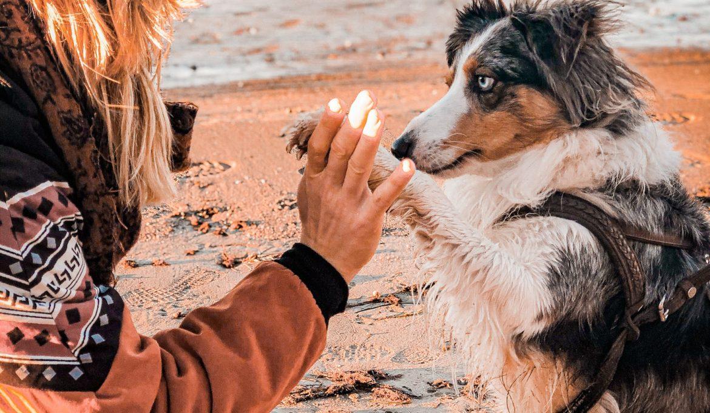 Arthrose beim Hund – Ursachen, Behandlung und Heilung